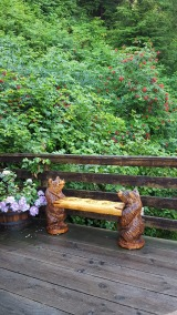20170731_091015_001 Salmonberries and a bear bench