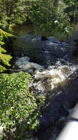 20170731_092216 creek salmon spawn
