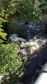 20170731_092216 creek salmon spawn