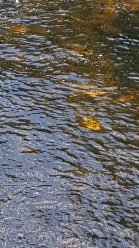 20170731_092432_005 orange salmon