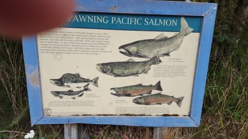 20170802_101940 Salmon poster