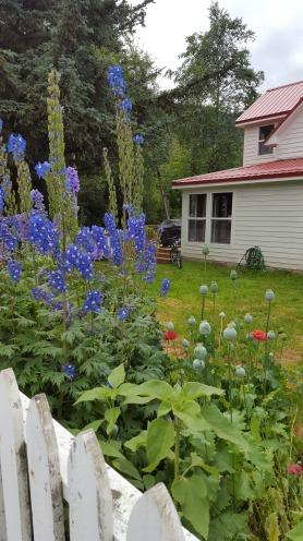 20170802_110657_002 garden in skagway