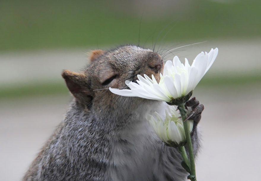 animals-smelling-flowers-42__880
