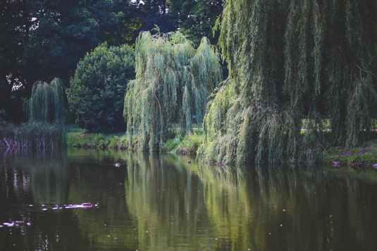 nature-water-garden-trees.jpg