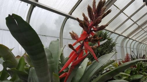 20191109_123843 (1) Ti plant