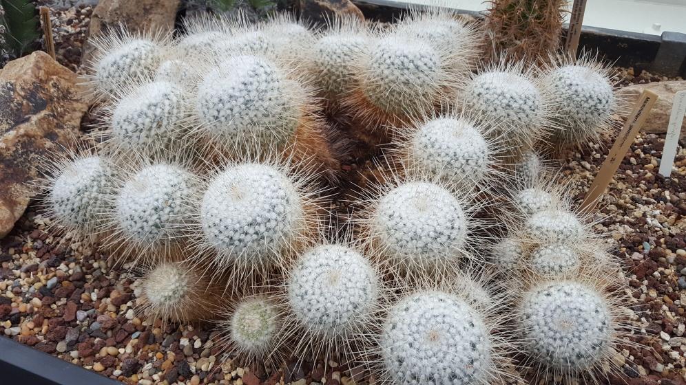 20191109_124232 (1) eyeball cactus